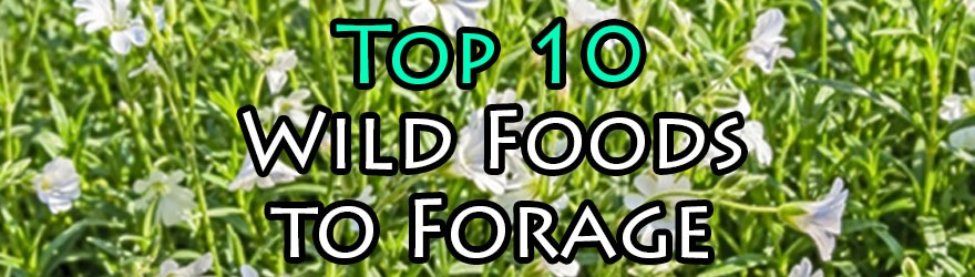 Top 10 Wild Foods to Forage